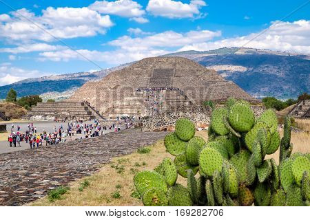 View of the pyramids at Teotihuacan, a major archaeological site in Mexico, with an out of focus nopal cactus on the foreground