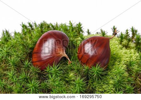 Chestnut fruits on a moss on white background