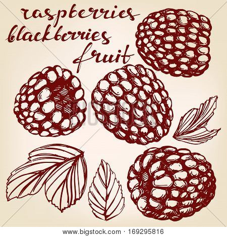 blackberries, raspberries set hand drawn vector illustration realistic sketch