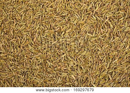 Dried Cumin seeds (caraway) background, nature background