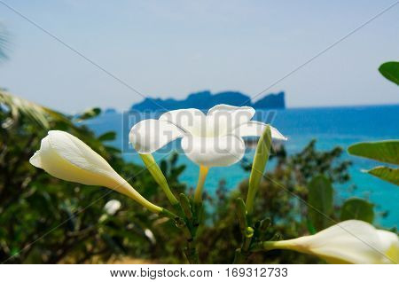 Blooming Trees Tropical Verdure
