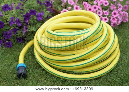 Plastic hose-pipe in front pink flowers on a grass