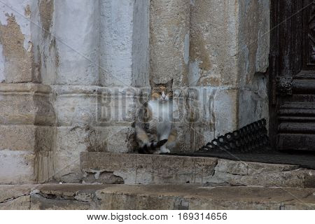 A cat sitting at the church in Vladimir, Russia
