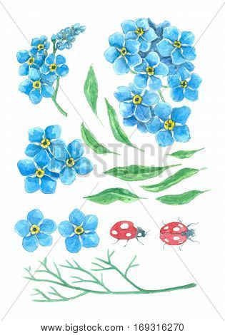 Forget Me Not And Ladybugs. Watercolor Set.