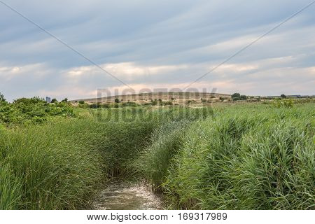 Rainham Marshes, Essex, England. Shot shows tall reeds blowing with a small marshy area and countryside in the background.