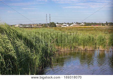 Rainham Marshes in Summer on a sunny evening.