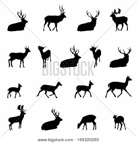 Vector illustration of Santa Claus flying with reindeer. Christmas reindeer silhouettes. Vector illustration isolated on white background.