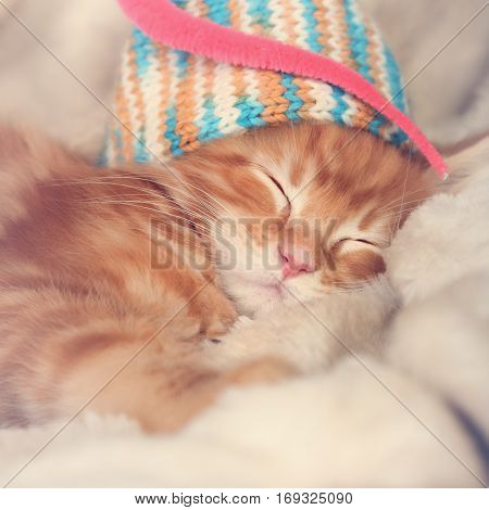 Beautiful Sleeping Red Solid Maine Coon Kittens Covered In Warm Blanket And Colorful Hat. Soft Light