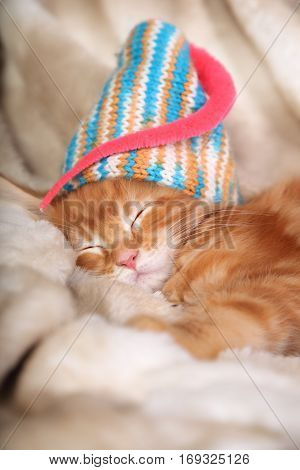 Beautiful Sleeping Red Solid Maine Coon Kittens Covered In Warm Blanket And Brigh Colorful Hat. Soft