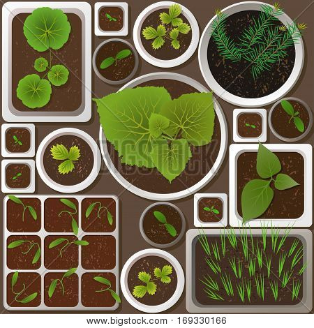 Vector set of flat realistic seedlings of garden plants in different pots on brown background in spring.