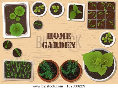 Vector set of flat seedlings of garden plants in different pots on wooden surface. Top view. For web template agriculture store adv.