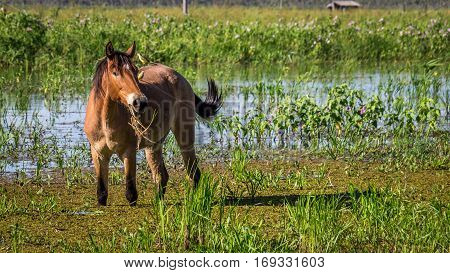 Portrait of a horse with two birds sitting on its back in Pantanal wetlands