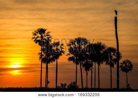 Sunset with bird and trees near Fortin Patria, Pantanal, Paraguay
