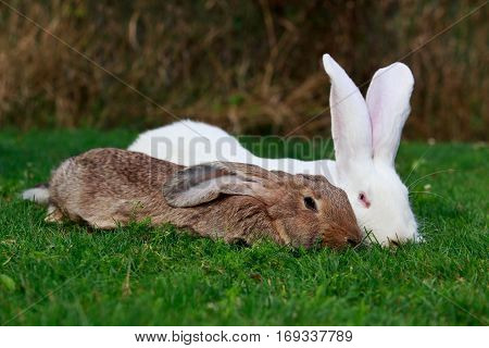 white and gray rabbit on a green grass