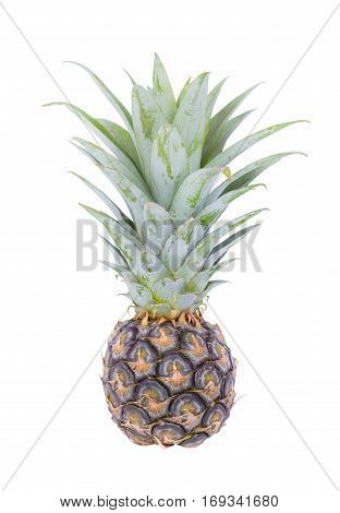 Small Pineapple Isolated On White Background