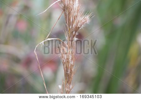 An extreme close up of a cattail blooming