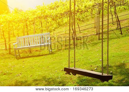 old wooden tree swing and bench in vineyard background at the morning.