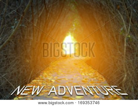 New adventure words on boardwalk in the mangrove forest at sunrise Travel adventure concept.