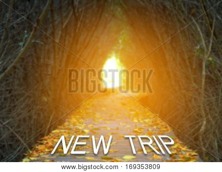 New trip words on boardwalk in the mangrove forest at sunrise Travel adventure concept.