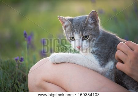 Cute cat purring outdoor with young child