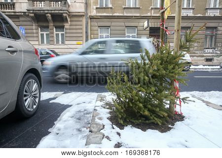 ZAGREB CROATIA - JANUARY 15 2017 : A discarded pine tree in the street after Christmas period in Zagreb Croatia.