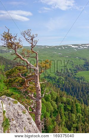 Mountain landscape with summer forest on rocks