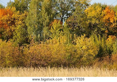 Beautiful view of the autumn trees. Scene in the colorful woodland.