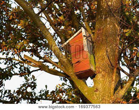 Colorful creative nesting box hanged on a back yard tree