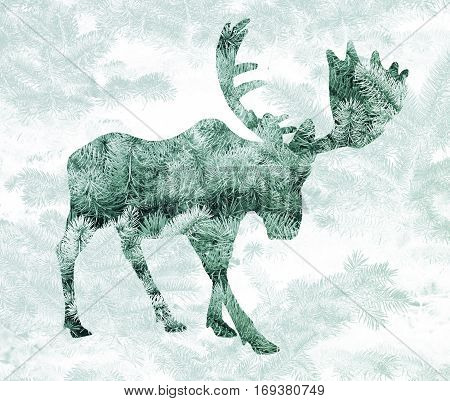Double exposure with the silhouette of a moose and pine needles of spruce.