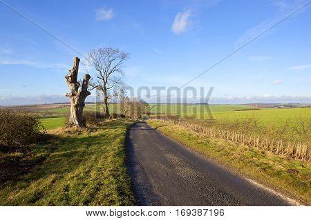 Sunny Winter Farming Landscape