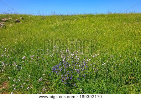 Spring flowering Golan. Gentle hills covered with fresh grass and wild flowers