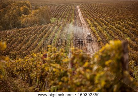 working machine to the grape field in autumn