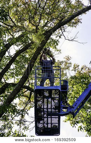 man standing on aerial lift cutting tree with chain saw
