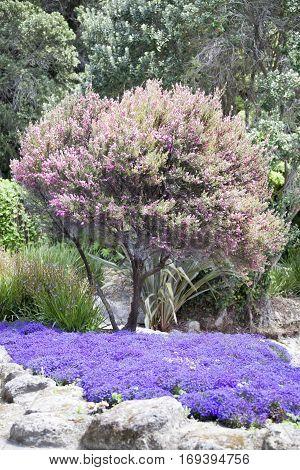 Bright colors of Centennial Gardens in Napier town (New Zealand).