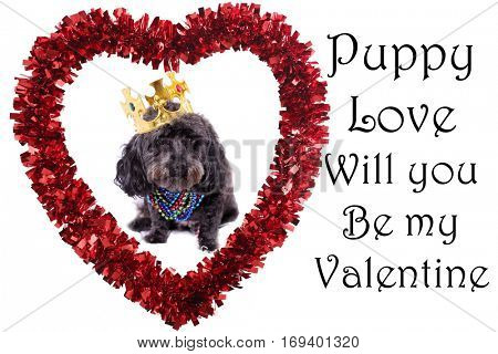 Cute Valentines Day Heart with a Dog inside isolated on white. Room for your text. Photo and Text easily replaced.