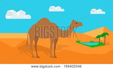 Traditional Eastern and African natural motif. Dromedary camel in the desert, oasis from nearby. Flat design vector. For traveling and nature concepts, habitat illustrating. Exotic domestic animal