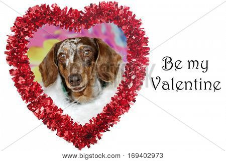 Funny Red Valentines Day Heart with a Dachshund Dog aka Wiener Dog inside. Isolated on white with text reading BE MY VALENTINE.  Text and dog images are easily removed and replaced.