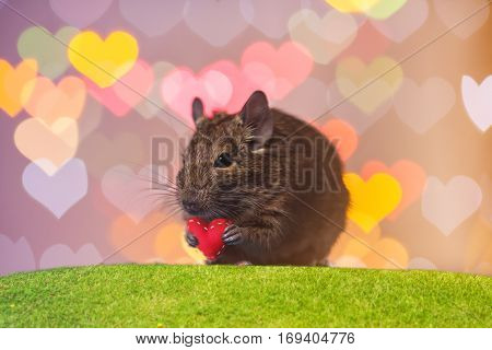 rodent holding a heart in his paws. Valentine's day