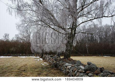 Frozen rural landscape with old stone fences