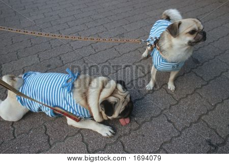 Dogs In Matching Suits