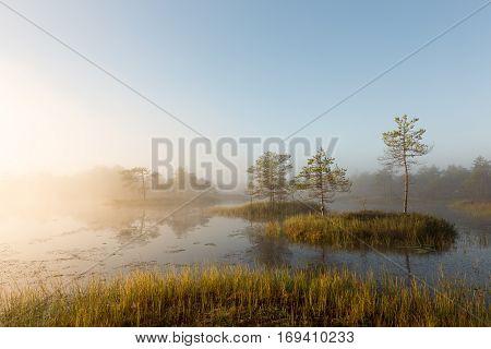 Misty summer morning in the magical bog