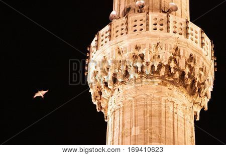 bird in the night sky near the minaret of Blue Mosque Istanbul
