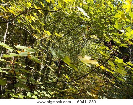 colorful green leaves in the forest with a lot of ramification