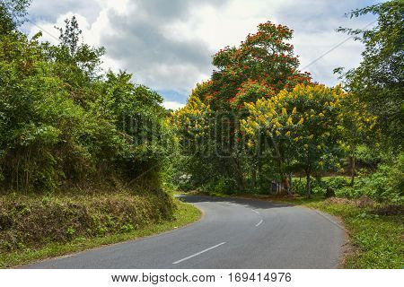 Blooming tree on roadside - Nadukani -