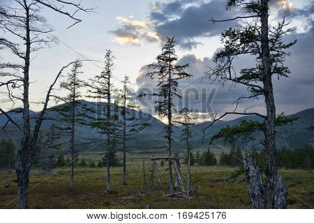 Sunset on the tundra: stunted trees and clouds