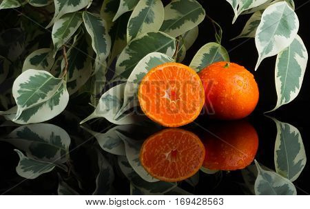 Tangerine with water splash fresh wet clear tropical cut tree