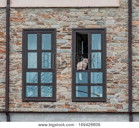 Cat sitting in the window frame of a stone house