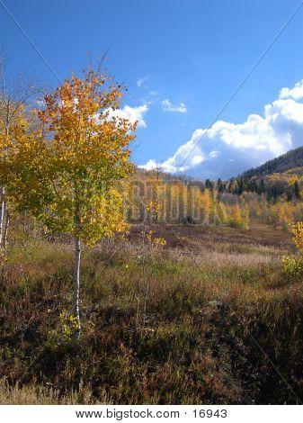 Vertical Autumn