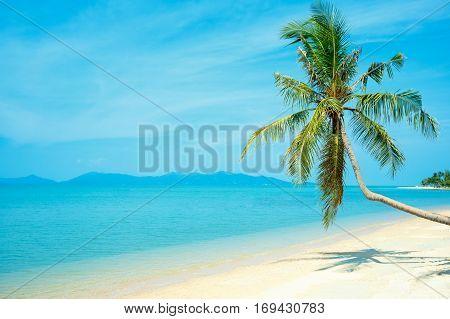 Coconut palm at perfect Thailand beach in Samui