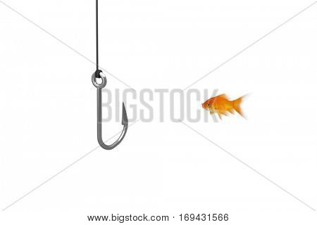 Side view of fish swimming against close-up of fishing hook